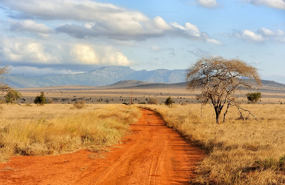 British Ecological Society Ecologists in Africa Grant