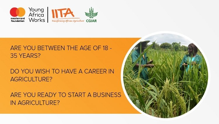 Young Africa Works-IITA Project